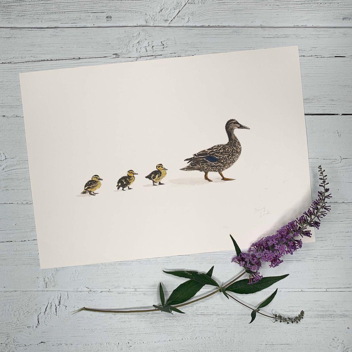 mother duck ducklings 1